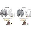 【神経科学トピックス】 サルとヒトに共通の大脳記憶想起回路を解明:サル後部頭頂葉を中心とする二つの ネットワークの役割分担