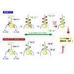 神経科学学会 | The Japan Neuro...