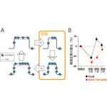 【神経科学トピックス】ヘッブ型可塑性と整調型可塑性の動的相互作用に関する理論モデル