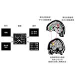 【神経科学トピックス】攻めるか守るかの戦略決定を直観的に行う脳のメカニズムを解明