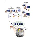 【神経科学トピックス】回顧と内省をつかさどる「メタ記憶」の神経基盤の因果的な解明