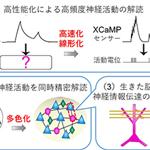 【神経科学トピックス】世界最高性能 Ca2+センサー『XCaMP』開発による脳情報動態の精密解読