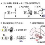 【神経科学トピックス】適切な意思決定を可能にする神経回路を同定